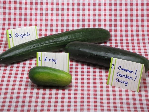 Cucumbers, Cucumbers, Cucumbers